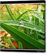 Autumn Drops Canvas Print
