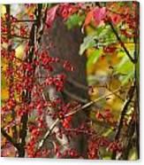 Autumn Excellence 6181 Canvas Print
