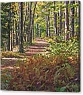 Autumn Ferns Canvas Print