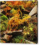 Autumn Ferns On Pickle Creek At Hawn State Park Canvas Print