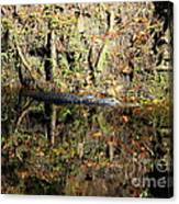 Autumn Gator Canvas Print