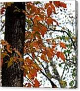 Autumn Glory At Tannehill Canvas Print