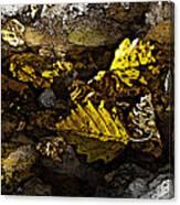 Autumn Gold Canvas Print