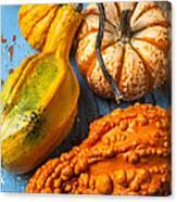 Autumn Gourds Still Life Canvas Print