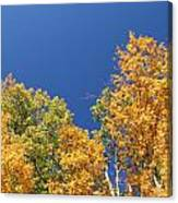 Autumn Has Arrived Canvas Print