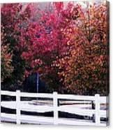 Autumn Has Returned Canvas Print
