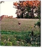 Autumn Hunt Canvas Print