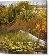 Autumn Hunting Canvas Print