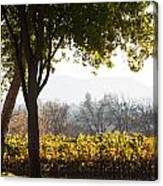 Autumn In A Vineyard Canvas Print
