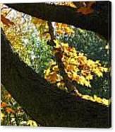 Autumn In London 7916 Canvas Print
