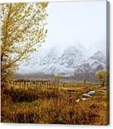 Autumn In Lone Pine Canvas Print