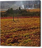 Autumn In Napa Valley Canvas Print