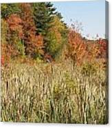 Autumn In New England Canvas Print