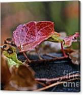 Autumn Ivy In Red Canvas Print