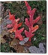 Autumn Leaf Art IIi Canvas Print