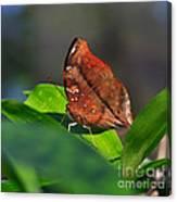 Autumn Leaf Butterfly Canvas Print