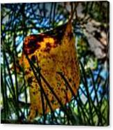 Autumn Leaf In The Pine Needles Canvas Print