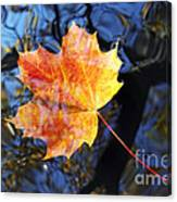Autumn Leaf On The Water Level Canvas Print