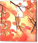Autumn Leaves Ablaze With Color Canvas Print