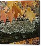 Autumn Leaves And A Lichen-covered Log Canvas Print