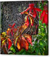 Autumn Leaves High On The Tree Trunk Canvas Print