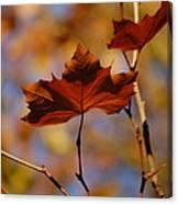 Autumn Leaves II Canvas Print