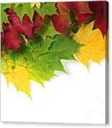 Autumn Leaves In Colour Canvas Print