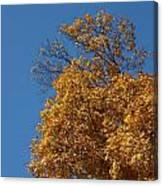 Autumn Leaves In Tn Canvas Print