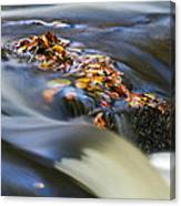 Autumn Leaves In Water Canvas Print