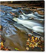 Autumn Leaves In Water II Canvas Print