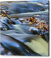 Autumn Leaves In Water IIi Canvas Print
