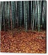 Autumn Leaves Litter The Ground Canvas Print