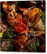 Autumn Leaves On The Moss Canvas Print