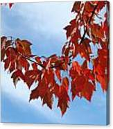 Autumn Leaves Tree Red Orange Art Prints Blue Sky White Clouds Canvas Print