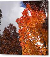 Autumn Looking Up Canvas Print