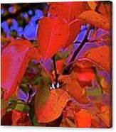 Autumn Magic 1 Canvas Print
