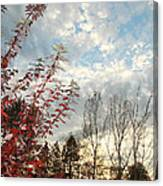 Autumn Maple And Sky Canvas Print