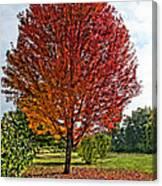 Autumn Maple Emphasized Canvas Print