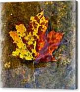 Autumn Maple Leaf In Water Canvas Print