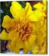 Autumn Marigold 2 Canvas Print