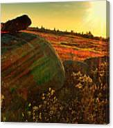 Autumn Morn In The Berry Field Canvas Print