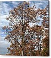 Autumn Oaks White Clouds Canvas Print