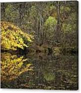 Autumn On The Pond Canvas Print
