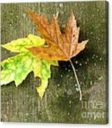Autumn Pair Canvas Print