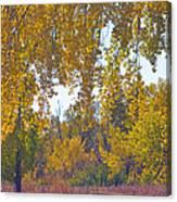 Autumn Picnic Spot Canvas Print