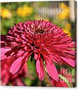Autumn Pink Canvas Print