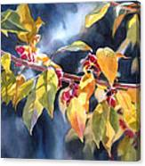 Autumn Plums Canvas Print