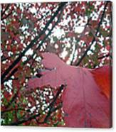 Autumn Red Maple Tree Canvas Print
