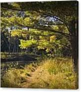 Autumn Scene Of The Little Manistee River In Michigan No. 0882 Canvas Print