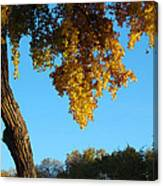 Autumn Shadows_rio Grande Blvd_albuquerque_nm Canvas Print
